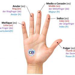 Los dedos de la mano en español, inglés, alemán y francés