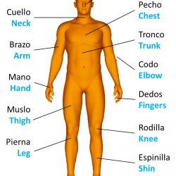 Human body parts, las partes del cuerpo humano en inglés