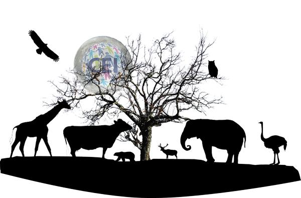 Animal sounds, el sonido de animal en inglés